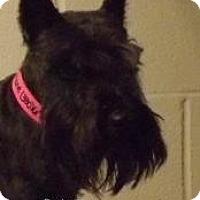 Adopt A Pet :: Daphne - North Benton, OH