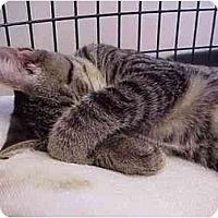 Adopt A Pet :: Wiley - Deerfield Beach, FL