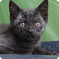 Adopt A Pet :: Gabby - Palmdale, CA
