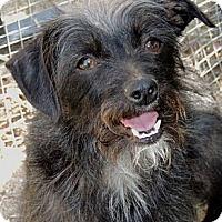 Adopt A Pet :: Allegra - La Habra Heights, CA