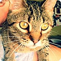 Adopt A Pet :: Taylor - Green Bay, WI