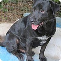 Adopt A Pet :: Roger - Tahlequah, OK