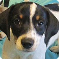 Adopt A Pet :: Cannoli - Allentown, PA