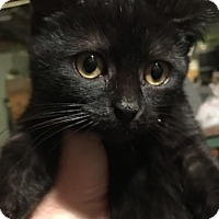 Adopt A Pet :: Frosty - East Brunswick, NJ