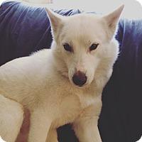 Adopt A Pet :: Kayla - Redondo Beach, CA