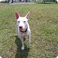 Adopt A Pet :: PINKY - West Palm Beach, FL