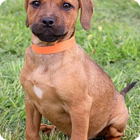Adopt A Pet :: Nickie ~ adopted! - Glastonbury, CT