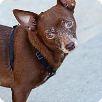 Adopt A Pet :: Rosie - Lafayette, IN