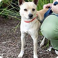 Adopt A Pet :: Daniel - Mission Viejo, CA