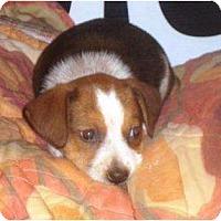 Adopt A Pet :: Puppy 3a - Irvington, KY