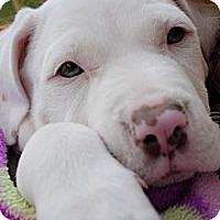 Adopt A Pet :: Clark - Orlando, FL
