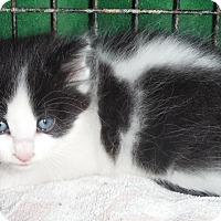Adopt A Pet :: Beth's LItter 5 - Richfield, OH