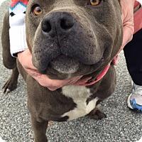 Adopt A Pet :: Tully - Irmo, SC