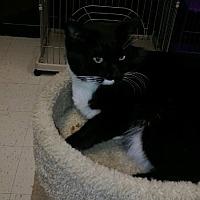 Adopt A Pet :: Blue - Vacaville, CA