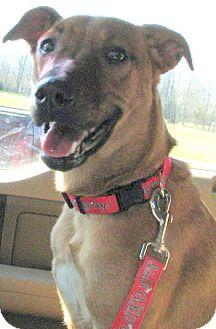 Terrier (Unknown Type, Medium) Mix Dog for adoption in Marietta, Georgia - Blondie