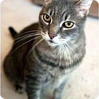 Adopt A Pet :: Mr. Magoo - Alexandria, VA
