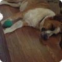 Adopt A Pet :: HOSS - Gilbert, AZ