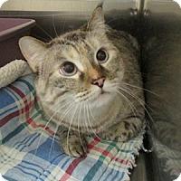 Adopt A Pet :: Speedy - Gilbert, AZ
