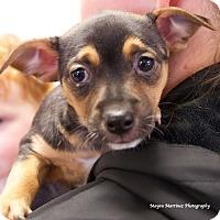 Adopt A Pet :: Jessie - Homewood, AL