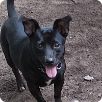 Adopt A Pet :: Ducky - Ormond Beach, FL