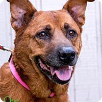 Adopt A Pet :: Maggie - Savannah, GA
