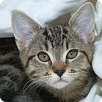 Adopt A Pet :: Tabitha M - Sacramento, CA