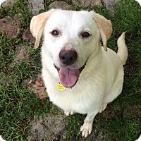 Adopt A Pet :: Olaf - Lewisville, IN