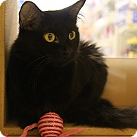Adopt A Pet :: Sabrina - Richmond, VA