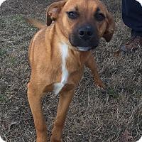 Adopt A Pet :: Juliet - Brattleboro, VT