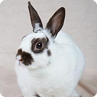Adopt A Pet :: Tara - Wheaton, IL