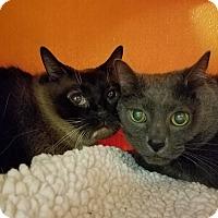 Adopt A Pet :: Sweetie & Angel - Elyria, OH
