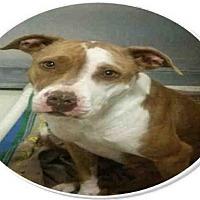 Adopt A Pet :: *REBA - Bakersfield, CA
