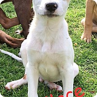 Adopt A Pet :: Wallace - North Brunswick, NJ