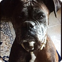 Adopt A Pet :: Carmen Miranda - Austin, TX