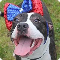 Adopt A Pet :: RAVEN - Clayton, NJ