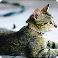 Adopt A Pet :: Mimi - Brea, CA