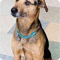 Adopt A Pet :: Dandy - Portland, OR