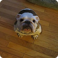 Adopt A Pet :: Archie - Strongsville, OH