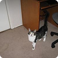 Adopt A Pet :: Sir Lancelot - Sacramento, CA