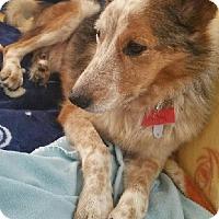 Adopt A Pet :: BUDDY- PENDING ADOPTION!!! - Birmingham, MI
