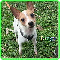 Adopt A Pet :: Dingy - Hollywood, FL