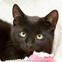 Adopt A Pet :: Annie - Fountain Hills, AZ