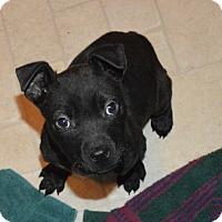 Adopt A Pet :: Frodo - Peyton, CO