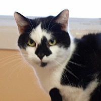 Adopt A Pet :: Holstein - Port Clinton, OH