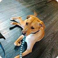 Adopt A Pet :: Gimli - Hopkinsville, KY