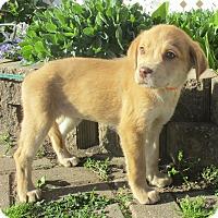 Adopt A Pet :: Sydni - West Chicago, IL