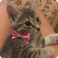 Adopt A Pet :: Mary Ann - Duluth, GA