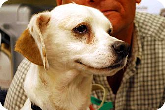 Beagle Mix Dog for adoption in Loudonville, New York - Langley/Bo