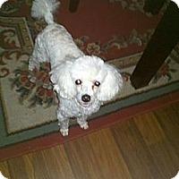 Adopt A Pet :: Gibbs - Cincinnati, OH