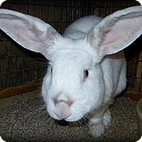 Adopt A Pet :: The Milkman - Williston, FL